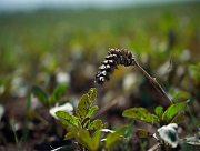 На Херсонщине воруют урожай