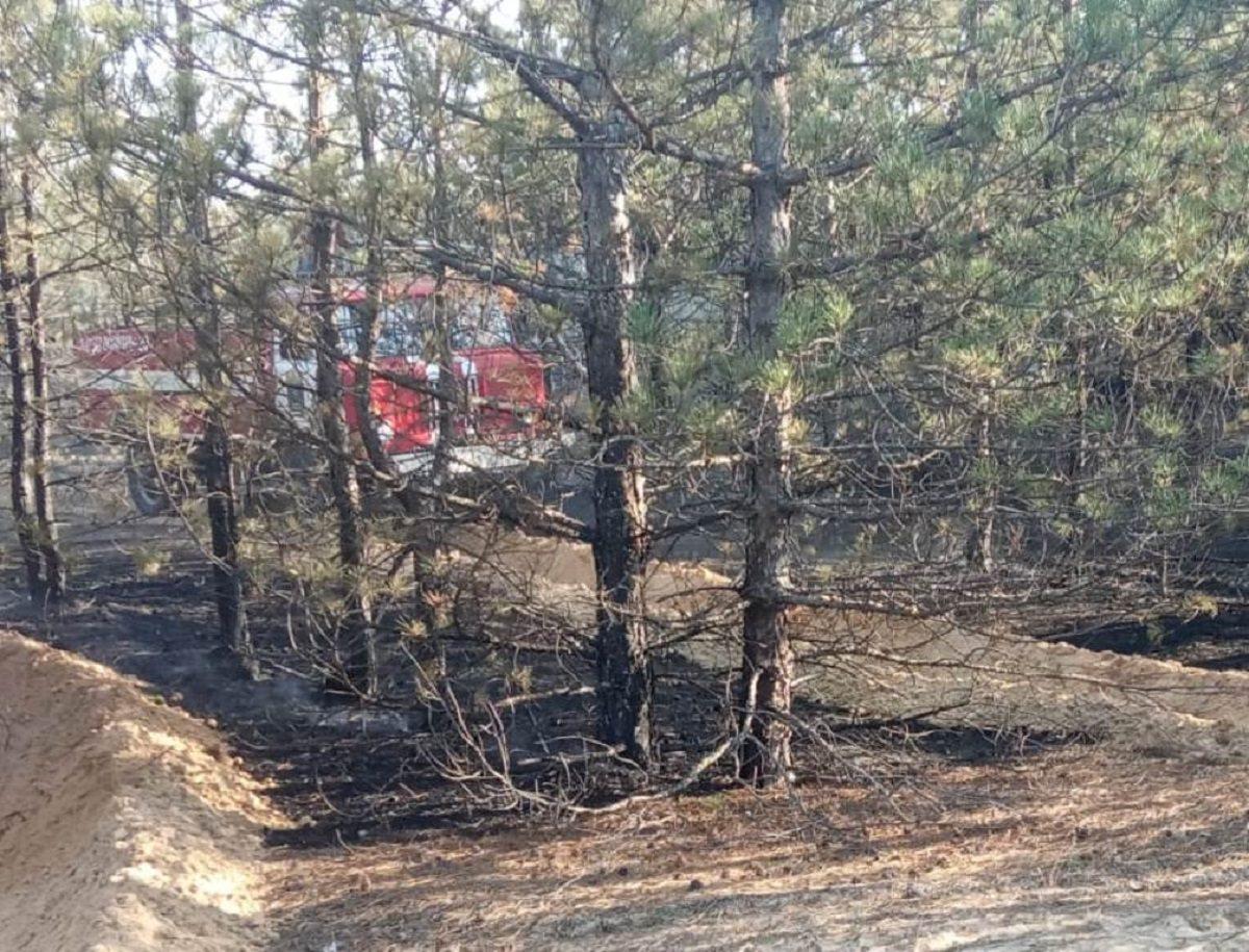 пожар, лес, подстилка
