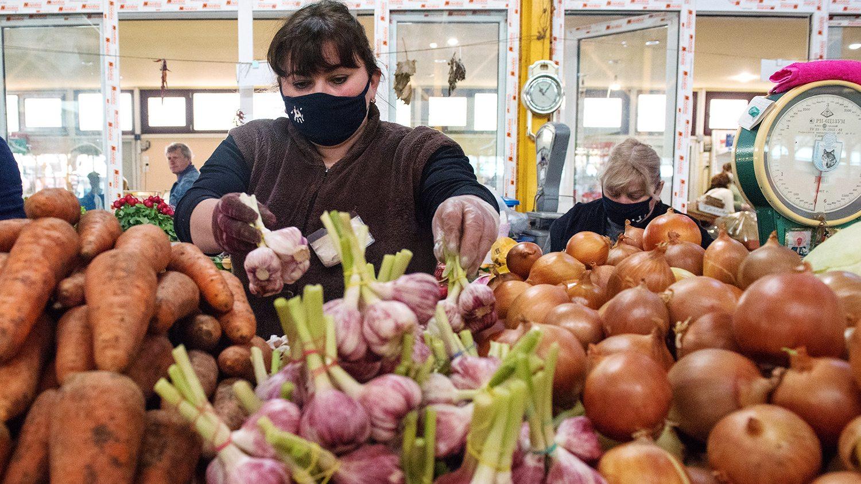 лук, аграрии, цены