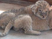 Поповнення зоопарку в Генічеському районі Херсонщини