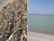 В Днепро-Бугском лимане зафиксирован массовый замор рыбной молоди