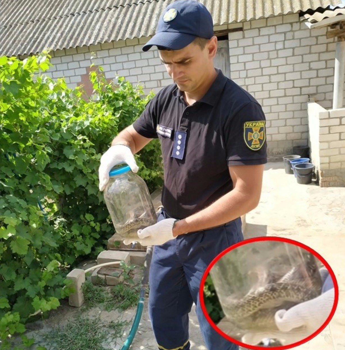 На Херсонщине спасатели избавили обитателей дома от змеи, оказавшейся неядовитой