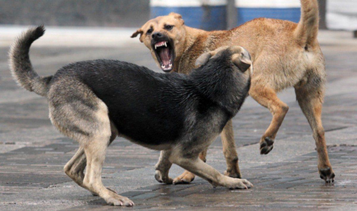 В Херсоне стая бродячих собак нападает на домашних животных