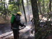 На Херсонщине случился масштабный лесной пожар