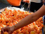 Неурожайное лето для садоводов Херсонщины