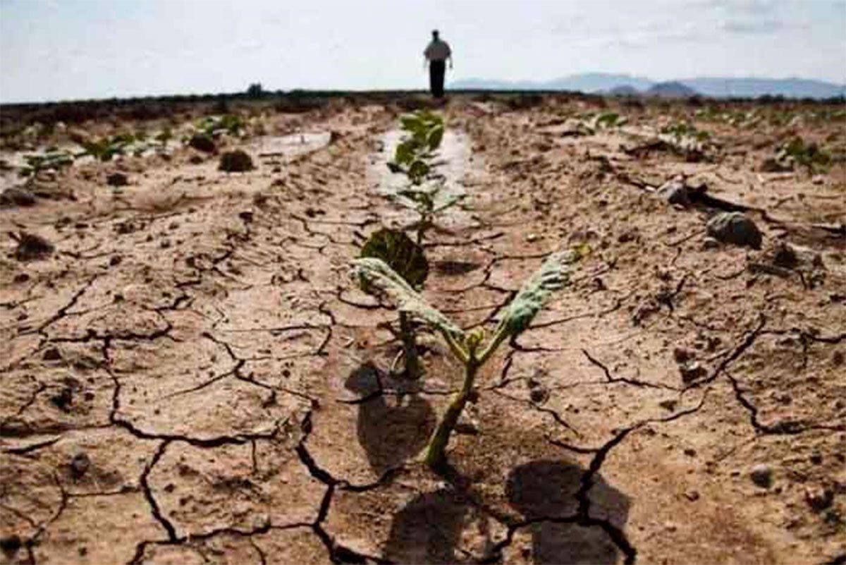На Херсонщині від спеки тріскається земля