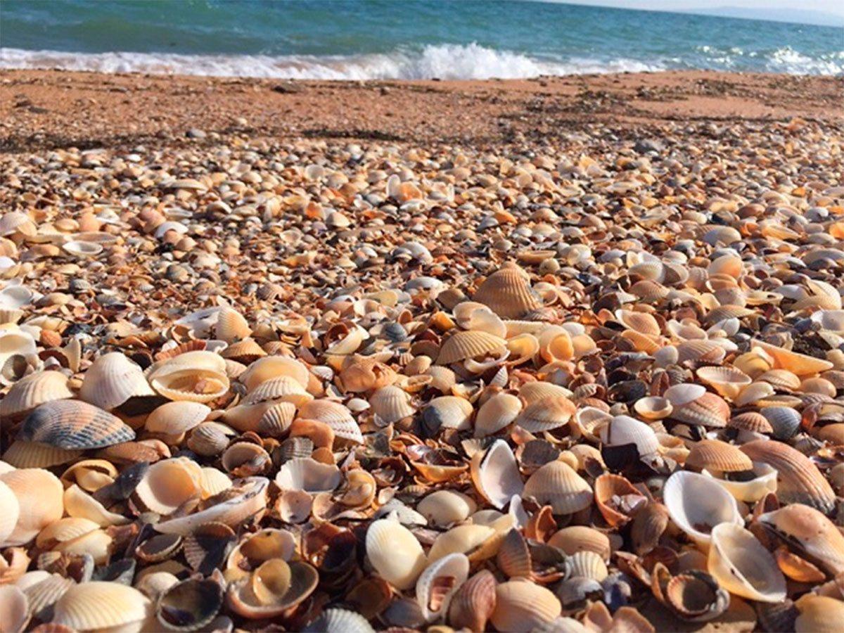 Херсонщина, пляж, Яновский