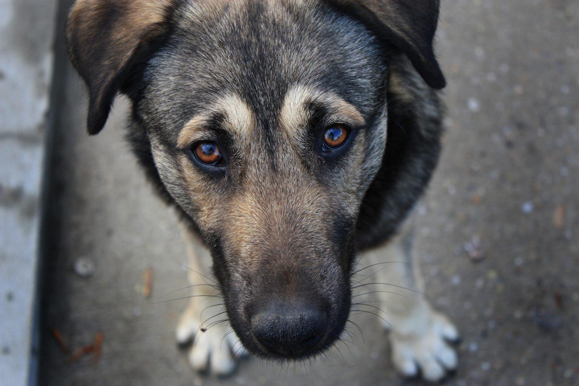 безпритульні тварини, проблеми