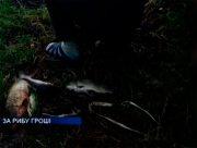 На Херсонщині за рибу гроші