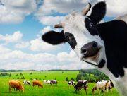 На Херсонщині подружжя посварилось через корову