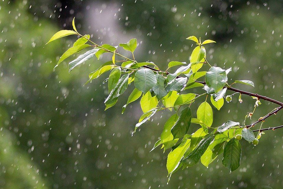 июль, ливни, погода