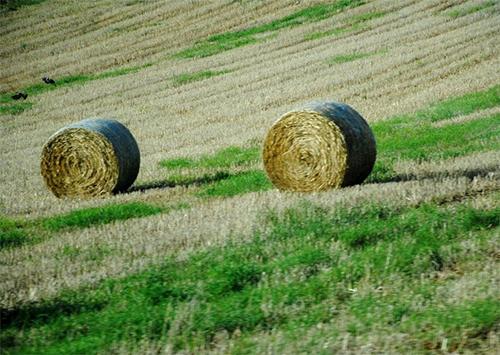 «АгроИнвест» предлагает землесобственникам арендные подсказки