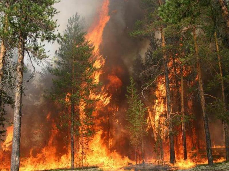 Зоной выжженных лесов становится Херсонщина