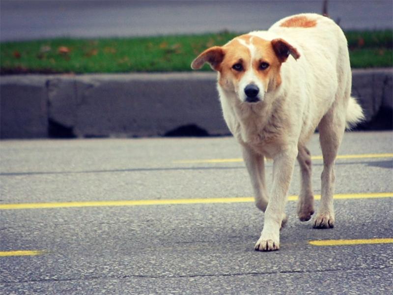 Пожертвовал здоровьем для спасения собаки автолюбитель на Херсонщине