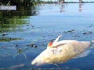 На Херсонщині гине риба