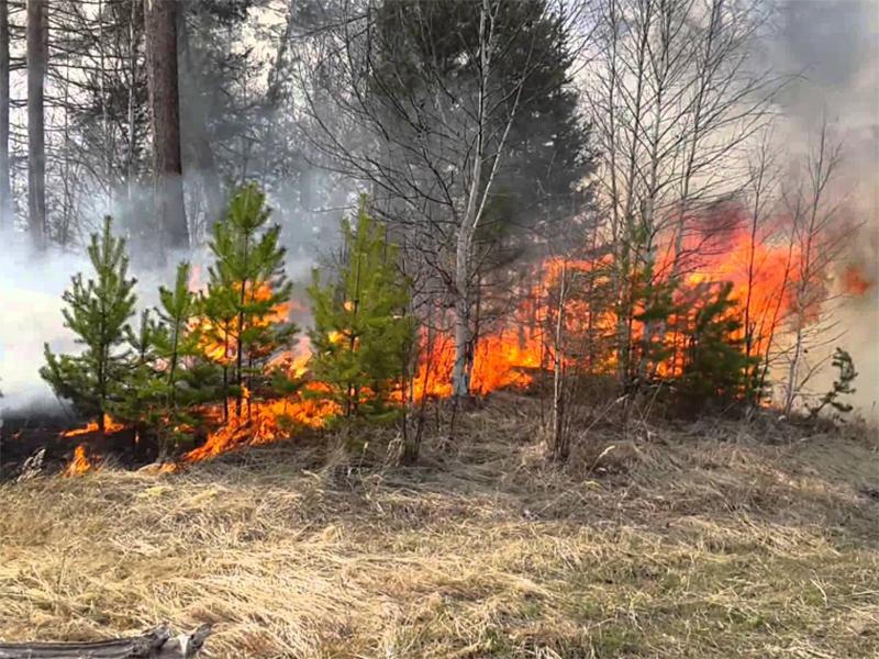 Підпали рукотворних лісів стали справжнім лихом на Херсонщині