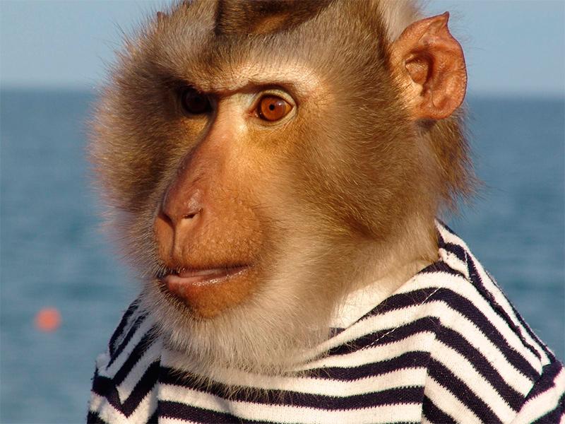 На Херсонщине курортников атакуют обезьяны