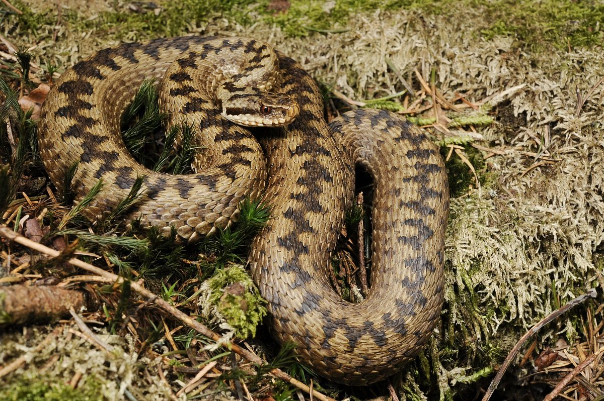 Под Херсоном на пожаре мужчину ужалила ядовитая змея