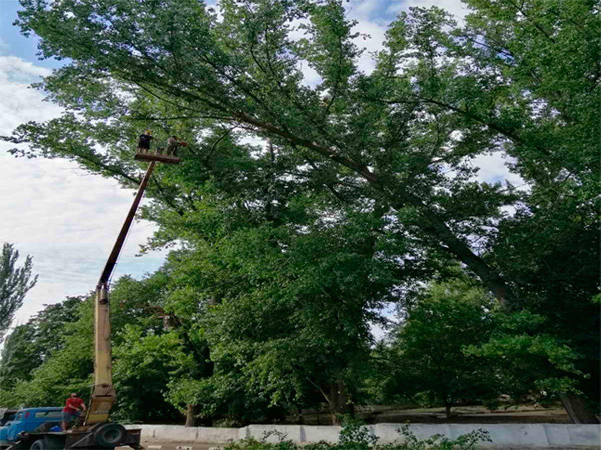 Херсон, дерева, ЗОШ № 36