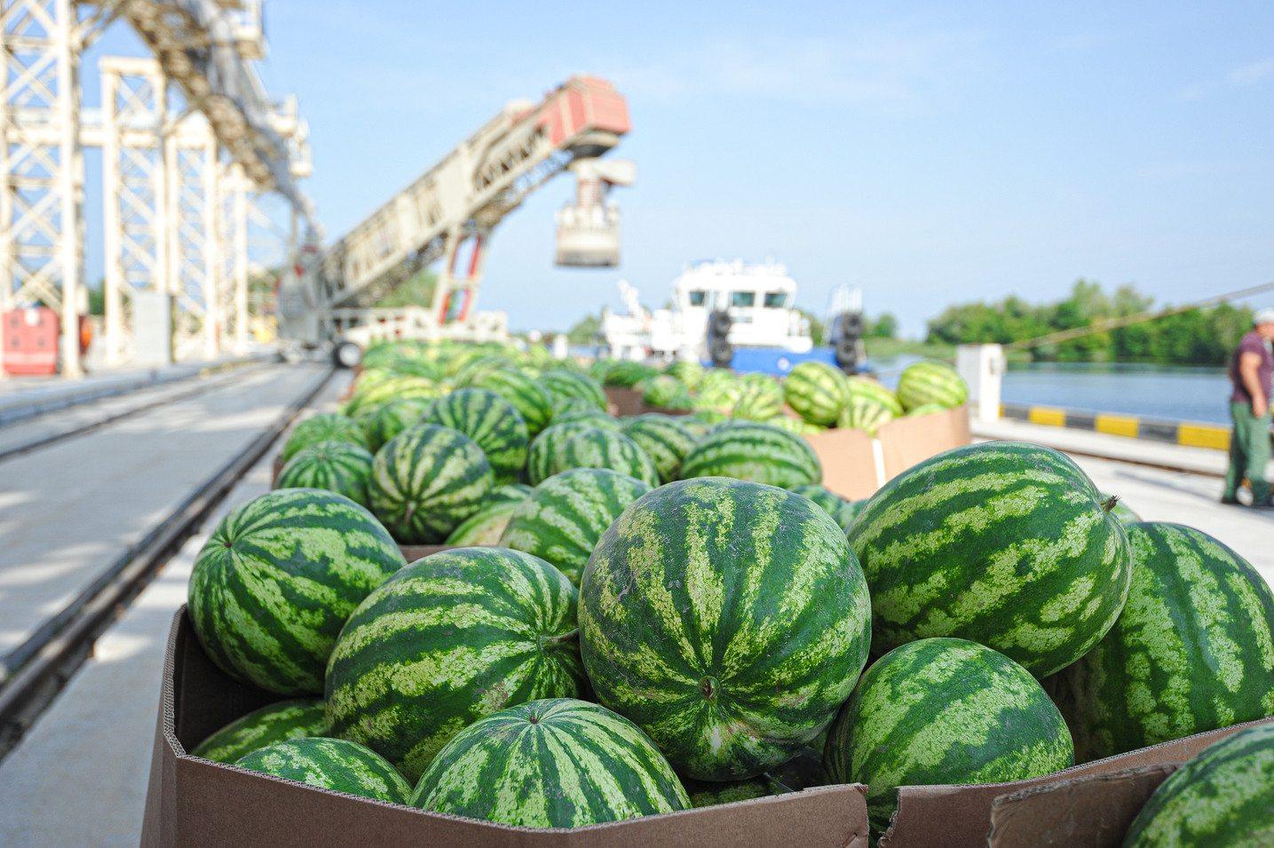 На Херсонщине не налажена логистика сезонных перевозок арбузов