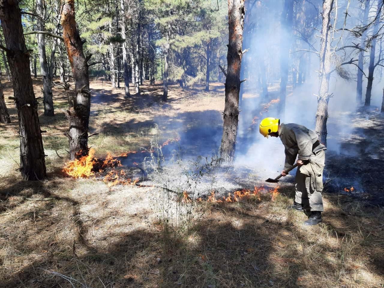 На Херсонщине спасатели и лесники потушили лесной пожар
