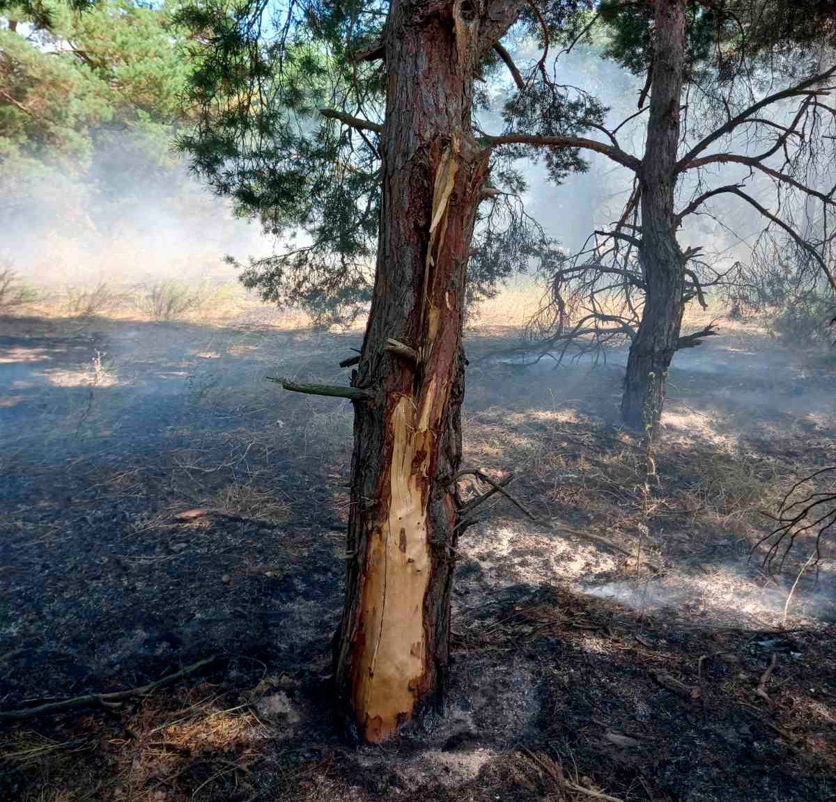 пожежі, ліс, блискавка