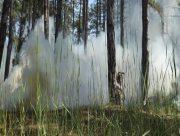 На Херсонщині з'явиться центр спостережень за пожежами