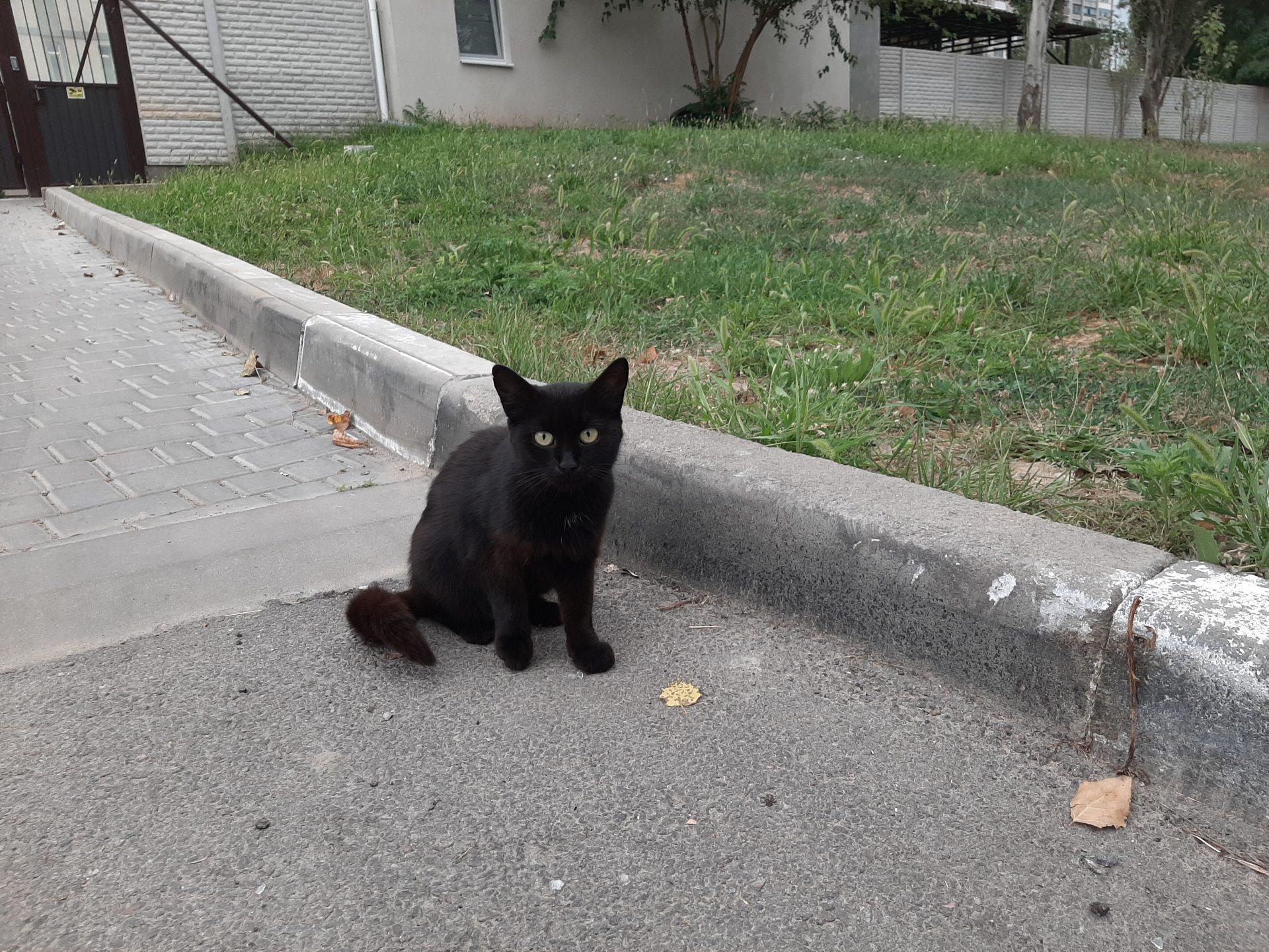 коти, удача, чорні