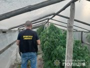 У місті Олешки на Херсонщині місцевий житель вирощував коноплі у теплиці
