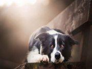 На Херсонщине людей штрафуют за собак