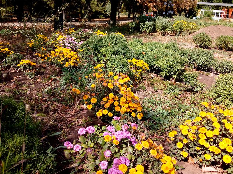 Цветущий уголок Херсона