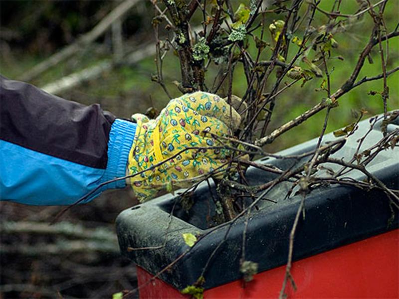 Экологическая зачистка разворачивается в садах под Херсоном