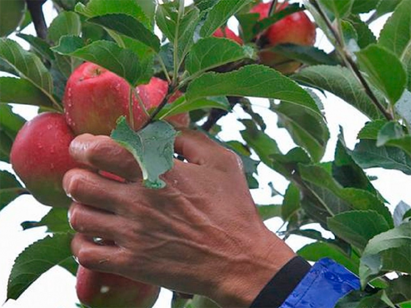 На Херсонщине псих чужой урожай мешками растаскивал