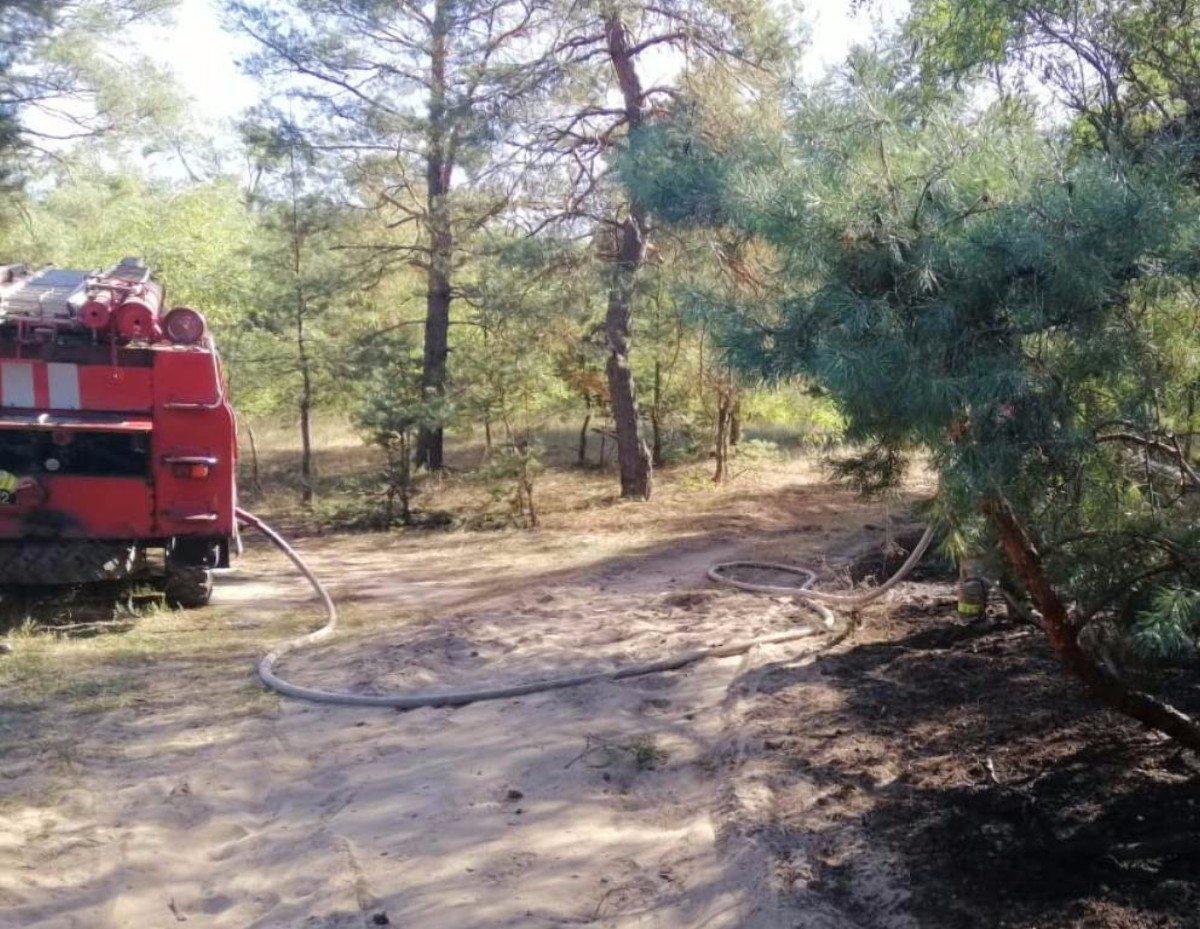 Великоалександровский район,лесной пожар,спасатели