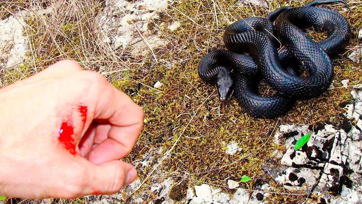 На Херсонщине укротителя змей из сельчанина не вышло