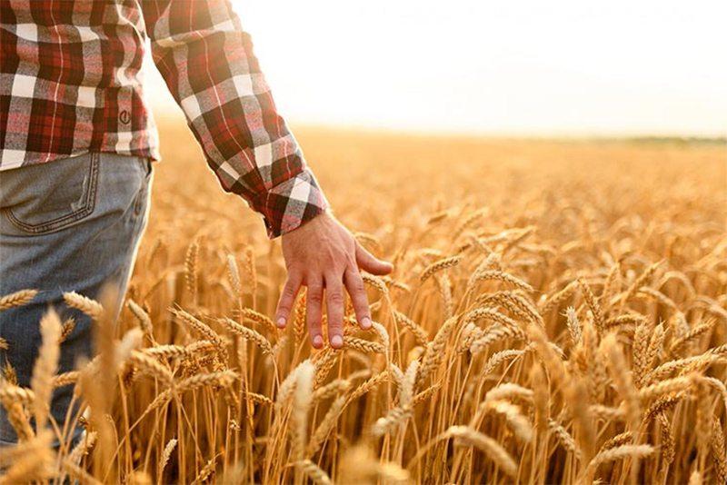 Кількість фермерів на Херсонщині скорочується