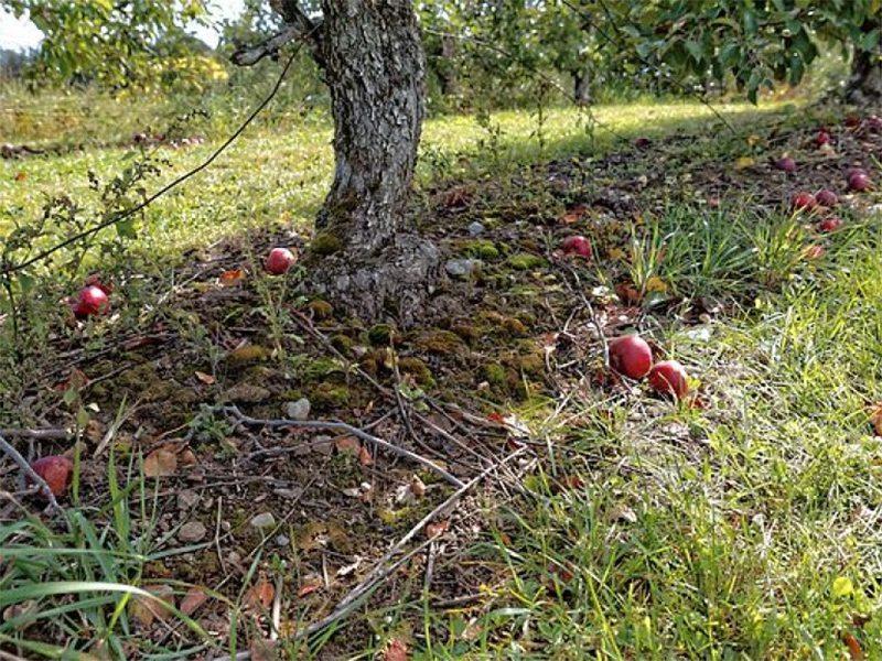 На Херсонщине сельчане забывают об осторожности