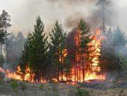 На Херсонщині знову горить ліс