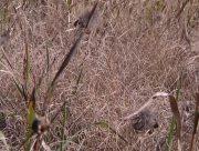 Наслідки посухи для заповiдника на Херсонщині