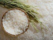 На Херсонщине хороший урожай риса стал проблемой для аграриев