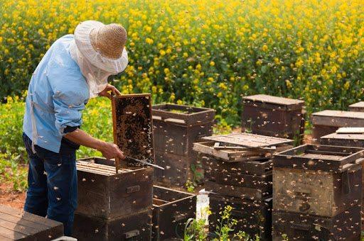 херсон, дотації, бджільництво