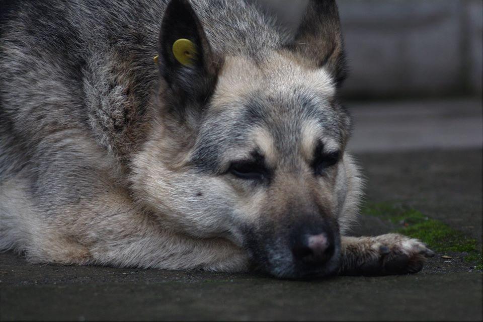 херсон, собака, травми