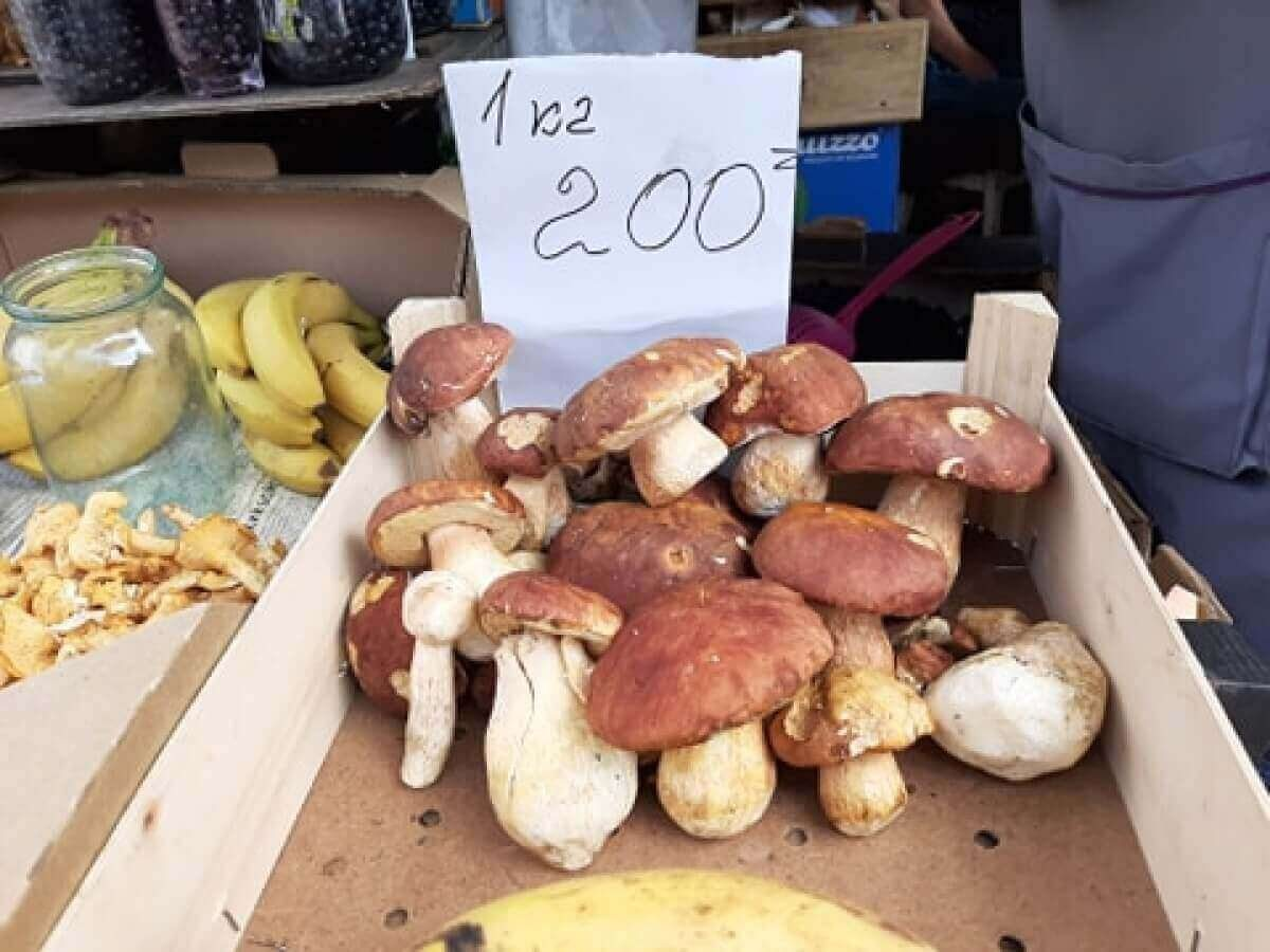 Херсонщина, грибы, доходы
