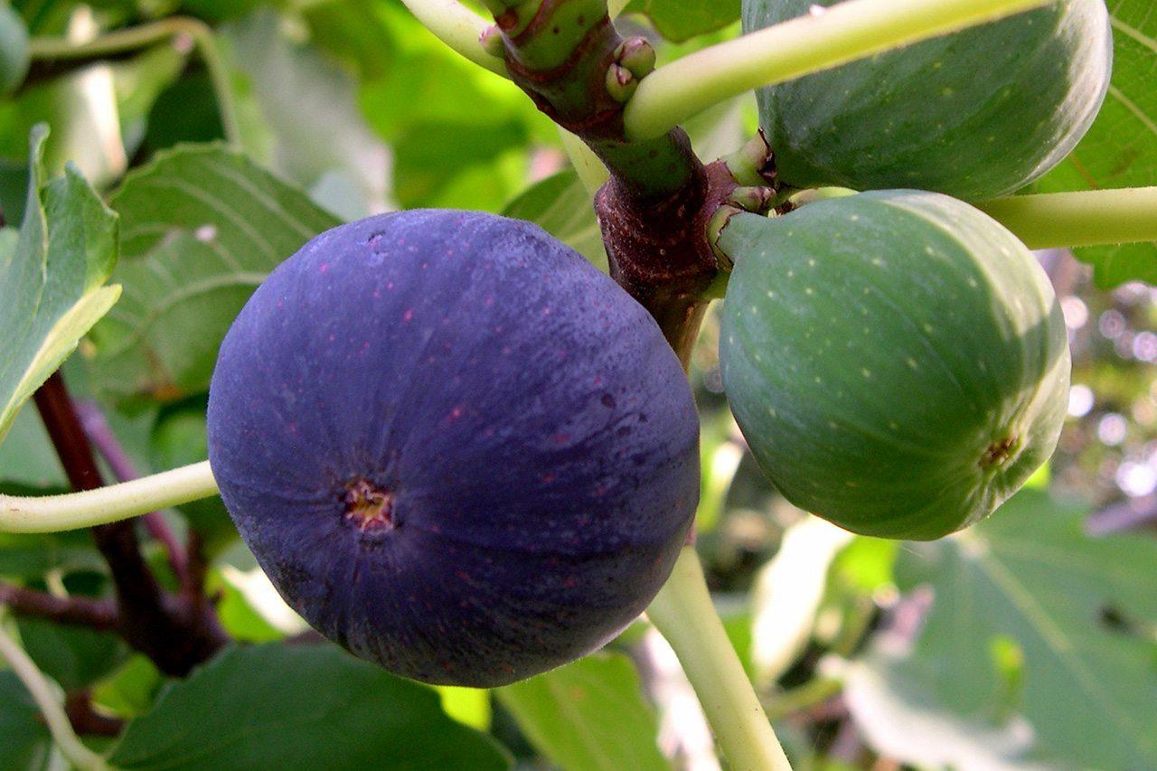 херсон, садовод, растения