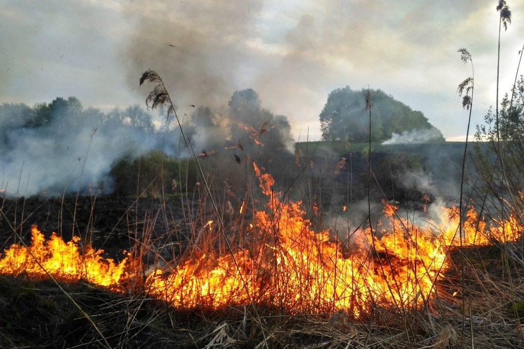 херсон, екосистема, пожежні