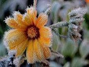На Херсонщине ожидаются первые заморозки