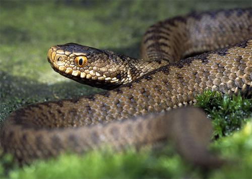 Чомусь не спиться зміям на Херсонщині