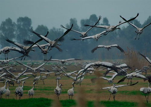 Птичий геноцид в Крыму обсуждают на Херсонщине
