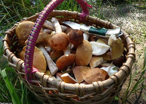 Жертви грибних отруєнь заповнили лікарні