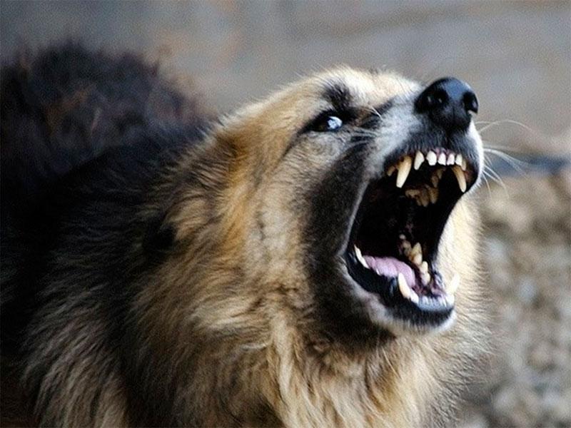 Херсонцев кусают дикие и домашние животные